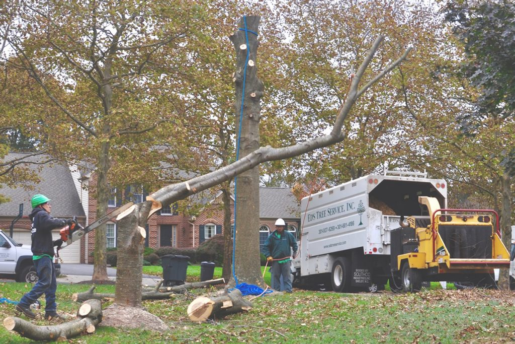 Tree care services